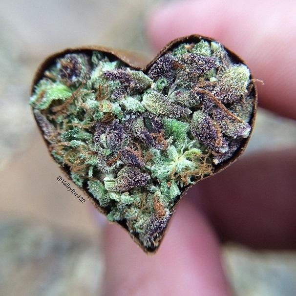 valleyrec heart blunt