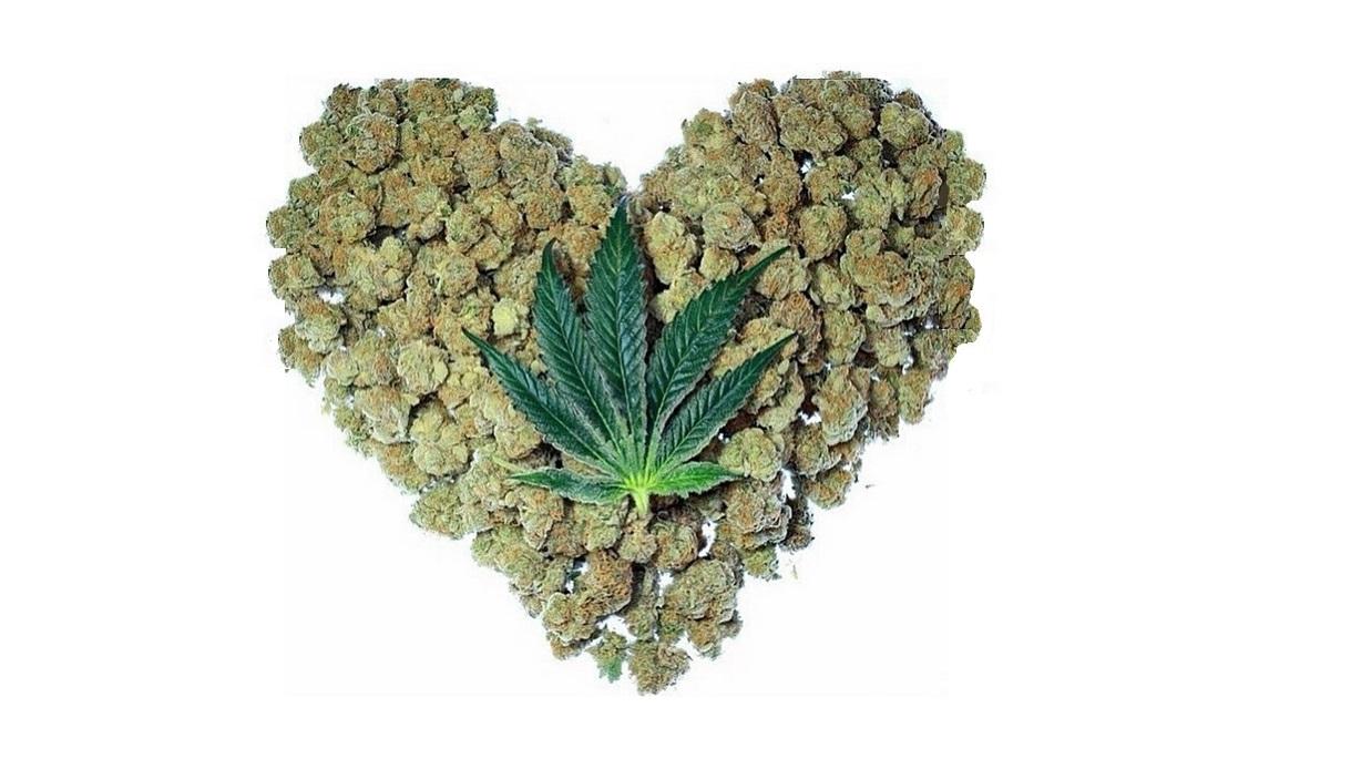 Может ли от марихуаны остановиться сердце посадить куст марихуаны